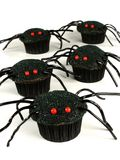 Halloween spider cupcakes over white Stock Photos