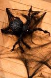 Halloween spider Royalty Free Stock Photos