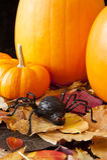 Halloween Spider Stock Image