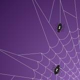Halloween Spider Web Stock Images