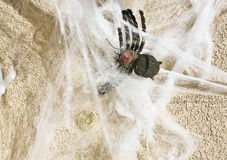 Halloween spider and web guarding doorbell Royalty Free Stock Photo