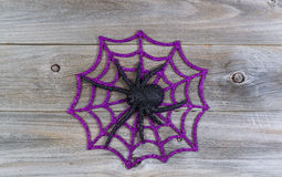 Halloween Spider in Web Royalty Free Stock Photo