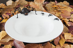 Halloween Spiders on an Empty Dish Royalty Free Stock Images