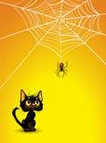 Halloween spindelrengöringsduk och svart kattbakgrund. Royaltyfria Bilder
