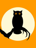 Halloween Spooky Owl Stock Photography