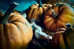 Halloween concept with pumpkins among bones stock image