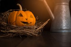 Halloween still life with pumpkins on wooden floor Royalty Free Stock Photos