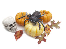 Halloween still life with spider and skull Royalty Free Stock Images