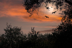 Halloween sunset with bats and full moon stock photos