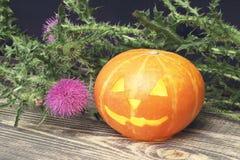Halloween Taschenlampe vom orange runden Kürbis mit einem brennenden Kerzeninnere und von einer Distelblume auf einem dunklen höl lizenzfreies stockbild