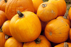 Halloween Thanksgiving Fall Pumpkins Royalty Free Stock Photos