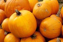 Halloween Thanksgiving Fall Pumpkins Royalty Free Stock Photos