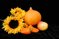Halloween thanksgiving orange pumpkin Stock Photography