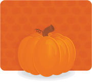 Halloween or thanksgiving pumpkin Stock Photos