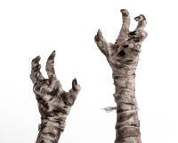Halloween-Thema: schreckliche alte Mamahände auf einem weißen Hintergrund Stockfoto
