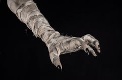 Halloween theme: terrible old mummy hands on a black background. Studio stock photos