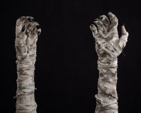 Halloween theme: terrible old mummy hands on a black background Royalty Free Stock Image