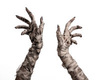 Halloween theme: terrible old mummy hands on a white background. Studio Royalty Free Stock Image