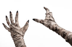 Halloween theme: terrible old mummy hands on a white background. Studio Royalty Free Stock Photos