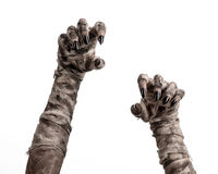 Halloween theme: terrible old mummy hands on a white background Royalty Free Stock Images