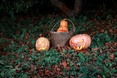 Halloween three pumpkins in leaves and grass in the dark, scary Royalty Free Stock Images