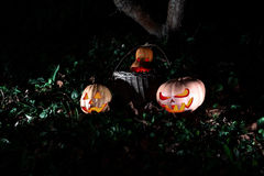 Halloween three pumpkins in leaves and grass in the dark, scary Stock Photos
