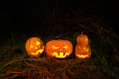Halloween three pumpkins scary funny and creepy in the woods on royalty free stock photos