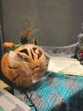 Halloween-tijd royalty-vrije stock foto
