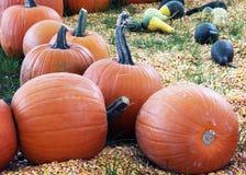 Halloween-tijd grote pompoenen Stock Fotografie