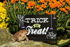Halloween Toad Stock Images