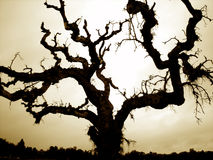 Halloween Tree. The perfect tree to scare all the little trick and treaters on halloween Stock Images