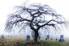 Halloween tree in cemetery in Pennsylvania fog. Royalty Free Stock Photo
