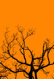 Halloween Tree on Orange royalty free stock images