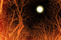 Halloween trees Stock Photo