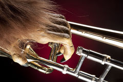 Halloween Trombone Monster Hand. A Halloween holiday gold brass trombone with a monster�s hand against a red and black background in the horizontal format Royalty Free Stock Photography