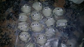 Halloween Truffle Mummies. FESTIVE oreo truffle mummies Stock Images