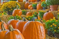 Halloween und Autumn Pumpkins Lizenzfreie Stockfotos