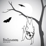 Halloween vector banner with bats Stock Photos