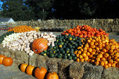 Halloween Vegetables. Halloween harvest in California royalty free stock photography