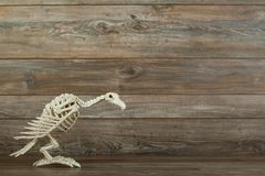 Halloween vulture skeleton on wood background royalty free stock image