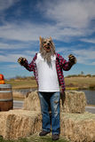 Halloween Werewolf Costume. A man dressed up as werewolf for Halloween Royalty Free Stock Image