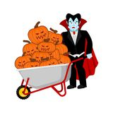 Halloween wheelbarrow and vampire dracula. bunch of terrible pum. Pkins. Vintage pumpkin. Vector illustration Royalty Free Stock Image