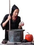 Halloween Witch looking at a skull head. A witch adds shrunken skull to her Halloween witches brew Royalty Free Stock Photography