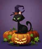 Halloween Witch's Cat on Pumpkin Stock Images