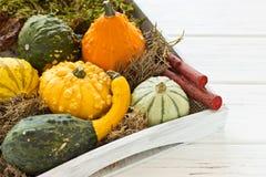 Halloween y decoración del otoño con las calabazas Fotos de archivo