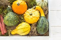 Halloween y decoración del otoño con las calabazas Foto de archivo