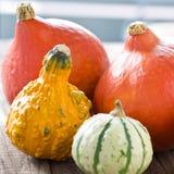 Halloween y decoración del otoño con las calabazas Fotografía de archivo libre de regalías