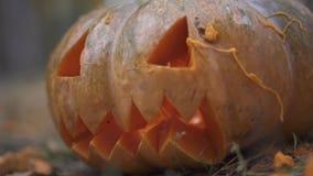 Halloween Zucca spaventosa di Halloween video d archivio