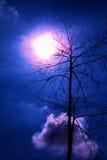 Halloweenowa błękitna noc z ptakiem na drzewie Obrazy Stock