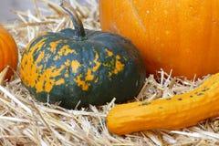 Halloweenowa bani dekoracja obraz stock